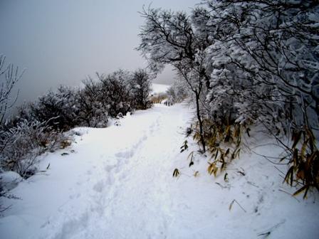 登山道CIMG0240