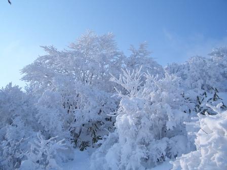 登山道の樹氷CIMG0089