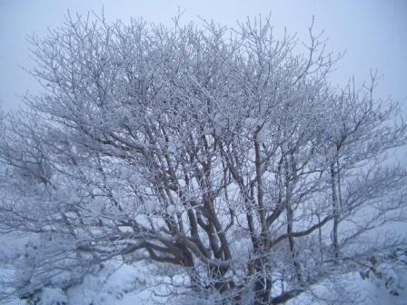霧氷CIMG0023