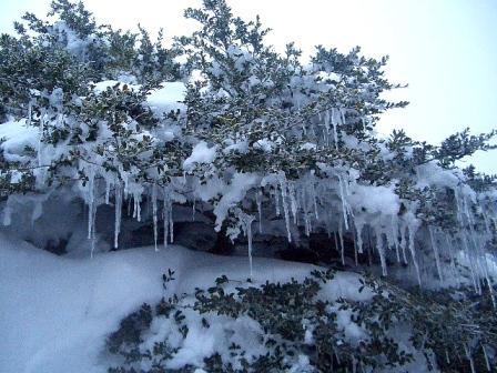 枝のツヅラCIMG0014