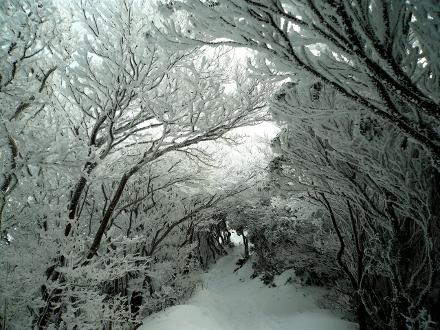 6 樹氷のトンネル (440x330)