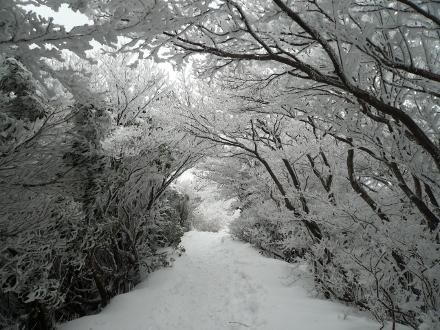 71 下山途中樹氷のトンネル (440x330)