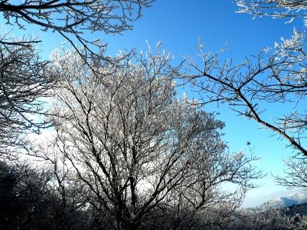 76 青空と樹氷 (440x330)