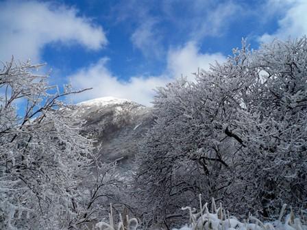12.樹氷の間から星生山