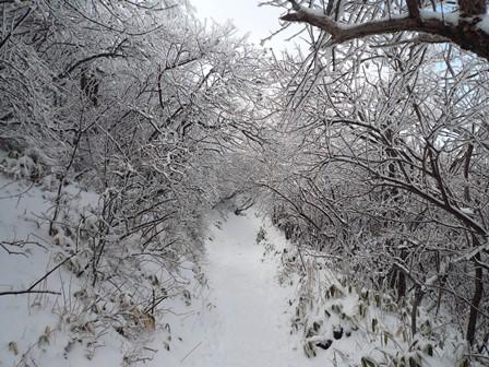 13.樹氷のトンネル