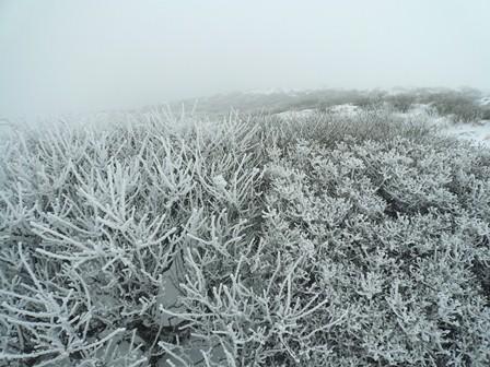 21.中岳山頂の樹氷