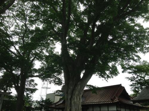 箕輪南宮神社6