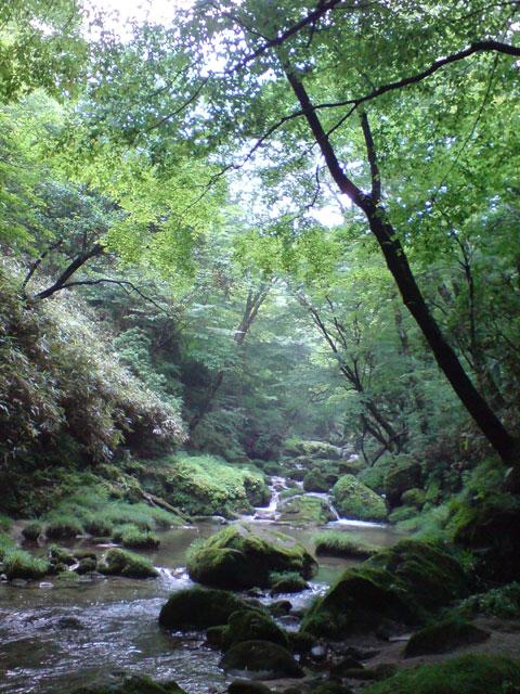 神の棲む森
