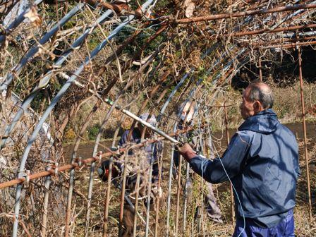 2010.12.18冬の蔓刈り