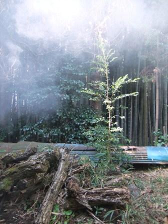2010.12.31裏庭の自然