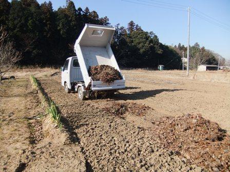 2011.1.22畑に撒く