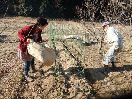 2011.1.22家族で農作業