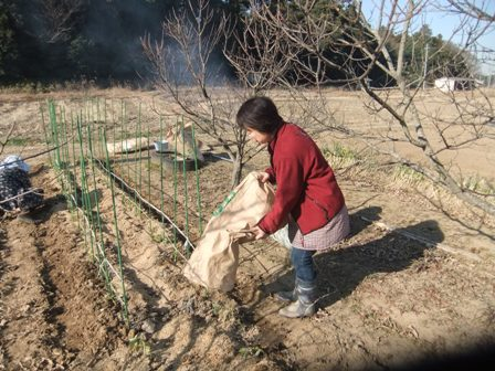 2011.1.22籾ガラ撒き