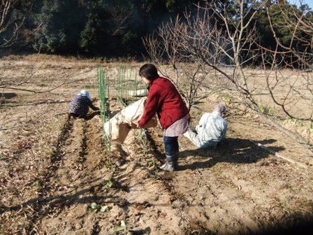 2011.1.22籾ガラを撒く妻