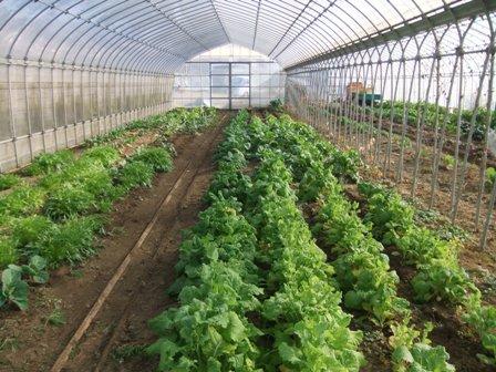 2011.1.22菜花の列