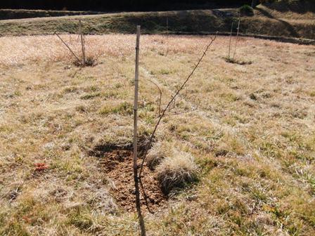 2011.1.30桃園の堆肥撒き 003
