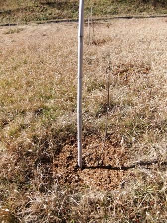 2011.1.30桃園の堆肥撒き 002