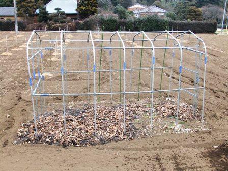 2011.2.6果樹園に堆肥を撒く001 (18)