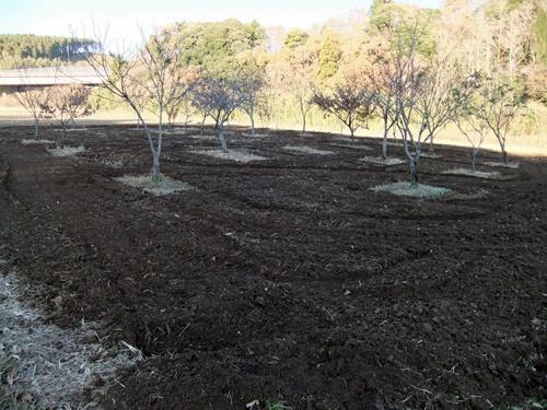 2011.12.11 畑耕作 047 (6)