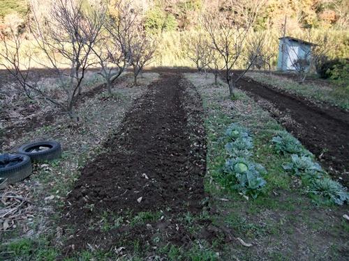 2011.12.11 畑耕作 047 (2)