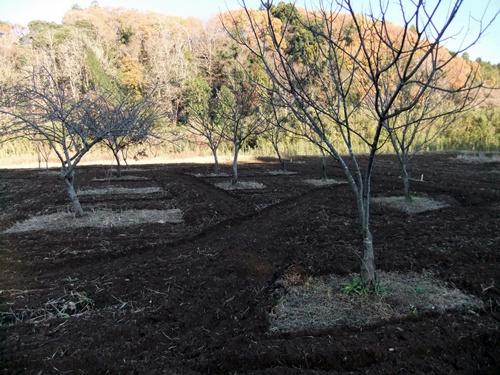 2011.12.11 畑耕作 047 (8)