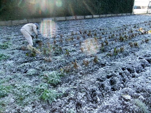 2011.12.10 ファーマーズそばの収穫019 (4)