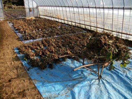 2011.12.10 ファーマーズそばの収穫019 (6)