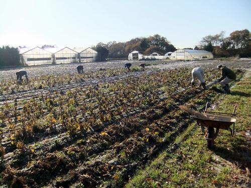 2011.12.10 ファーマーズそばの収穫019 (2)