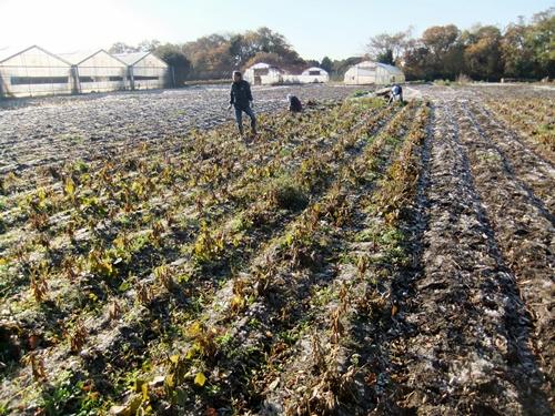2011.12.10 ファーマーズそばの収穫019 (3)