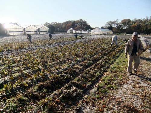 2011.12.10 ファーマーズそばの収穫019 (1)