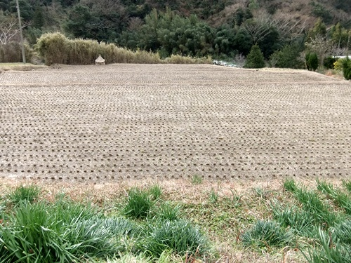 2013.1.16 野山歩き隊(水仙ロード) 021 (2)