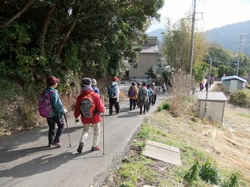 2013.1.16 野山歩き隊(水仙ロード) 021