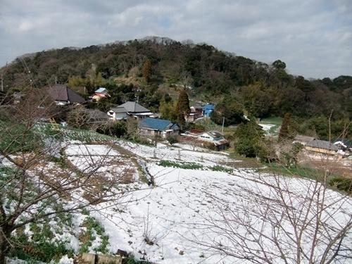 2013.1.16 野山歩き隊(水仙ロード) 021 (11)