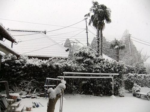 2013.1.27 2回目の雪(庭) 022 (3)