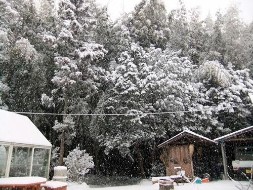 2013.1.27 2回目の雪(庭) 022 (2)