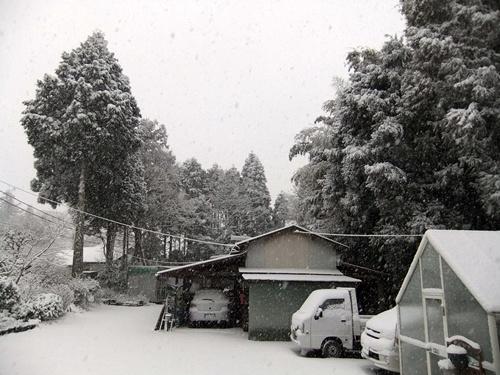 2013.1.27 2回目の雪(庭) 022 (1)