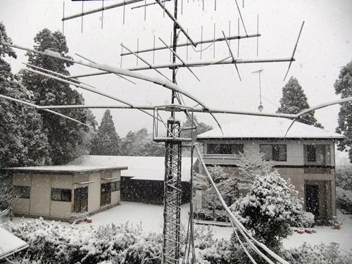 2013.1.27 2回目の雪(庭) 022 (4)