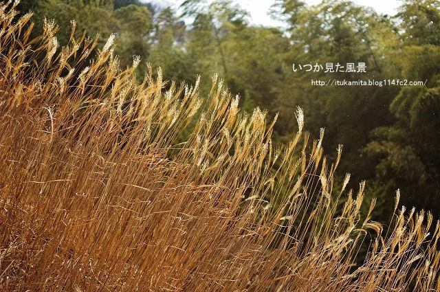 DS7_4636ri-s.jpg