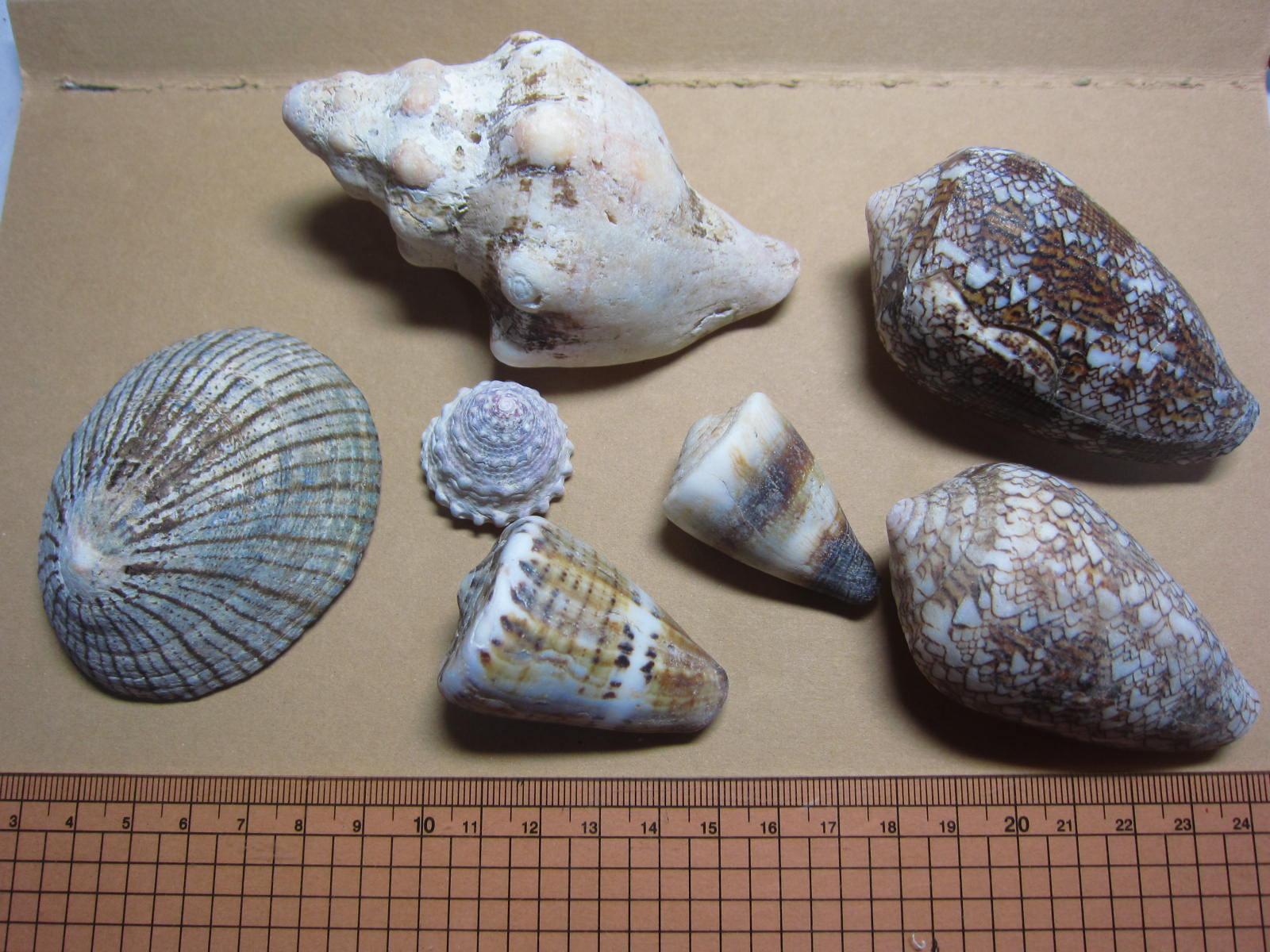 室戸の海岸の貝殻