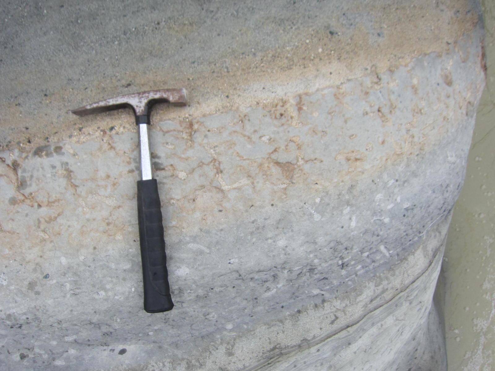 足柄層群_生痕化石