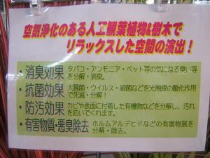 にせ観葉植物3