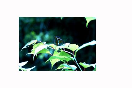 200611_15_21_f0113721_4173196.jpg