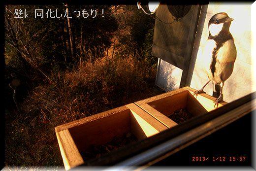 q9141_2013_01_12_05.jpg