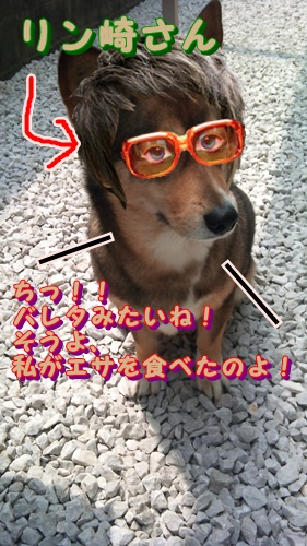 リン刑事5