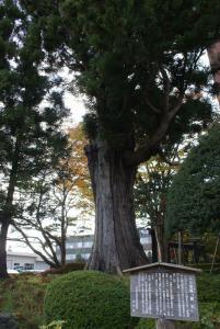 土塁と姥杉