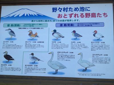 多種類の水鳥