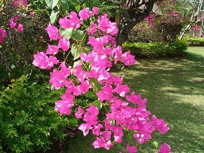 mimpi-garden
