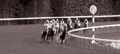 芝のレース