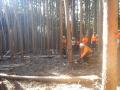 雪害木処理