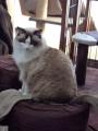 cat2014010100.jpg